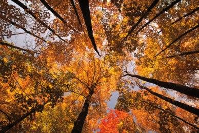 automne-au-quebec
